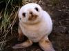 cucciolo-di-foca