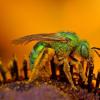 Le 10 punture di insetti più dolorose del mondo