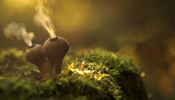 I funghi più strani del mondo in 25 foto fantastiche