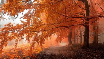 Le 12 foreste più belle del mondo in foto spettacolari