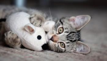 18 Curiosità sui gatti che forse non conoscete ancora