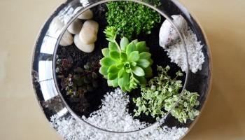 Come costruire un semplice terrario di piante grasse