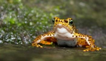 Che differenza c'è tra rana e rospo? Rimarrete stupiti