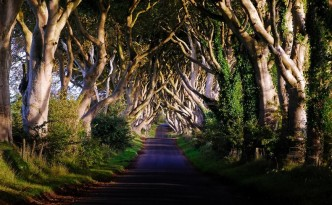 Dark Hedges in Irlanda del Nord