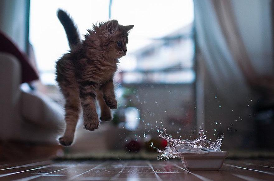 Il momento del salto