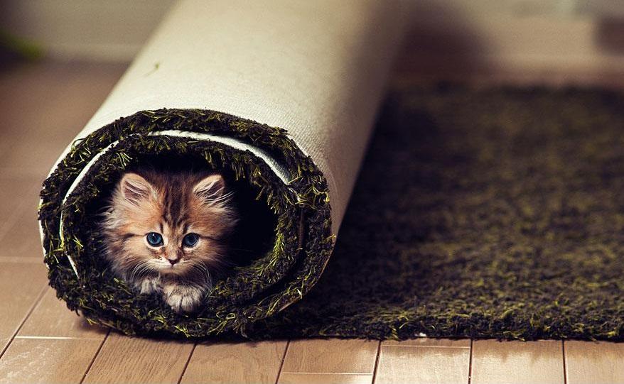 Avvolta nel tappeto