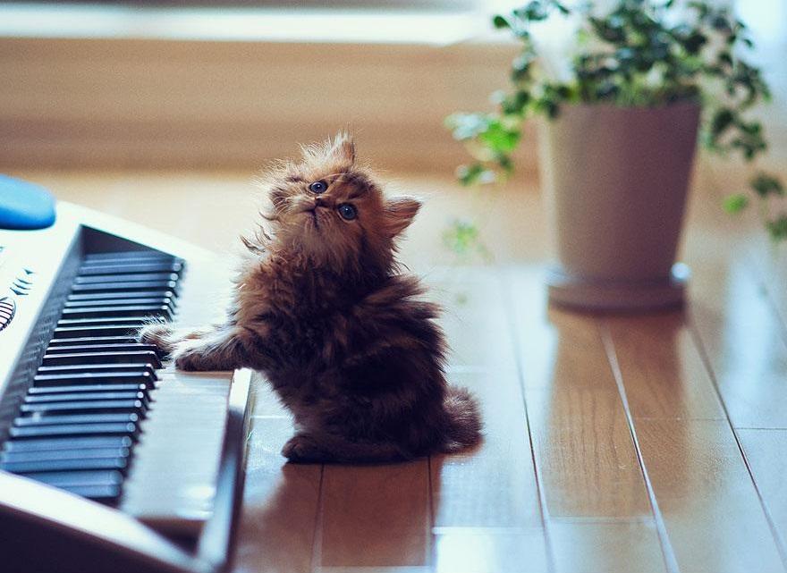 Daisy suona il piano