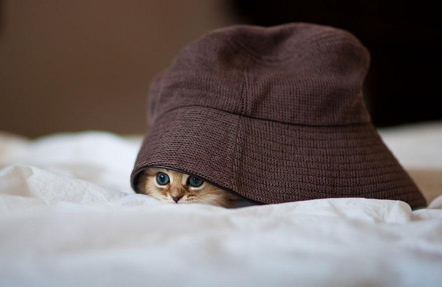 Nascosta sotto il cappello