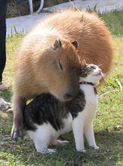 Gary e il gatto Flopsy