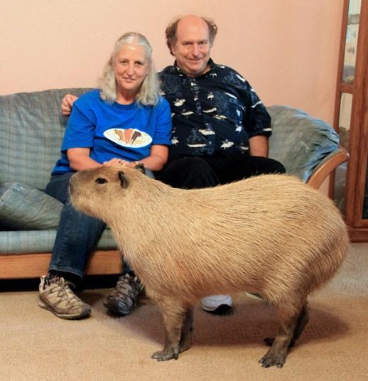 La famiglia Loveman con Gary il Capibara