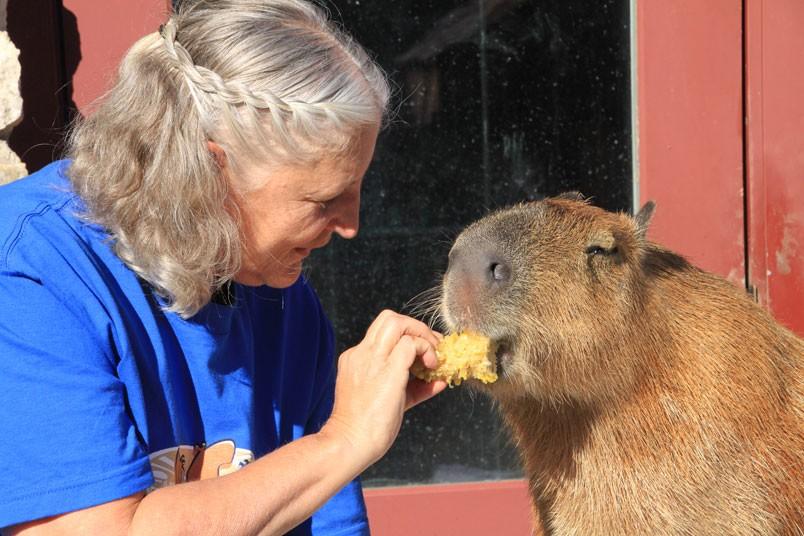 Melanie sfama Gary il Capibara
