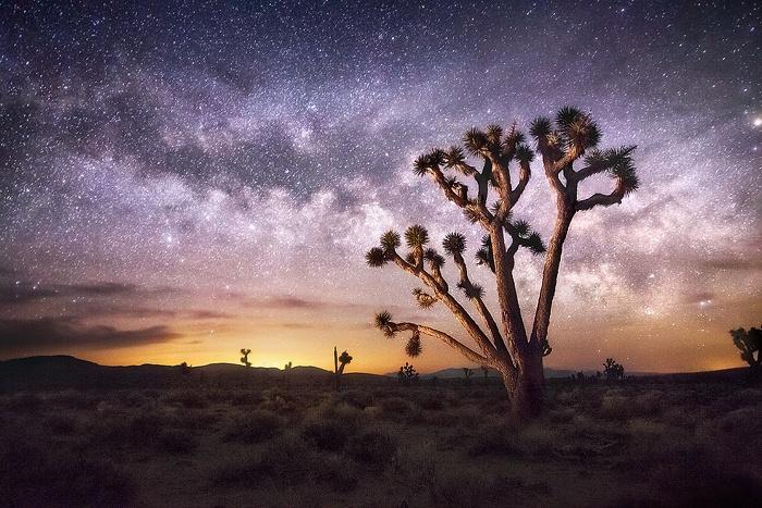 Parco Nazionale del Joshua Tree di notte