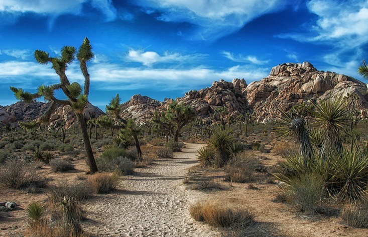 Visitare il Joshua Tree National Park