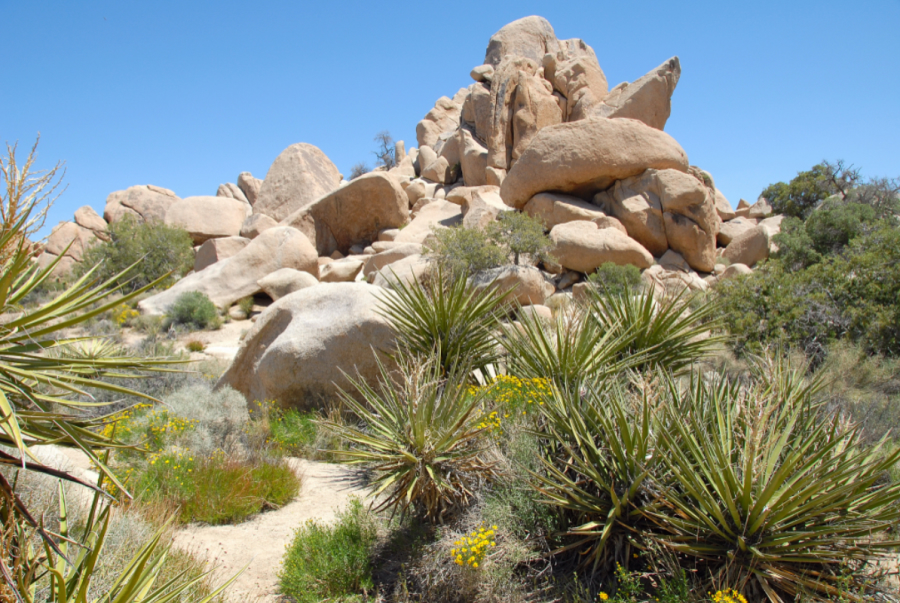 Joshua Tree National Park in estate