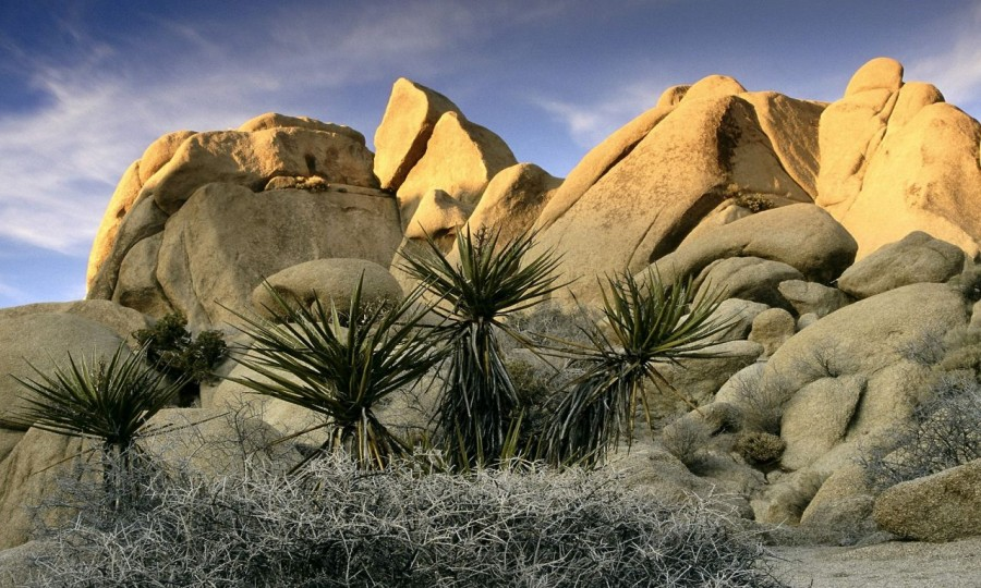 Deserto del Joshua Tree National Park