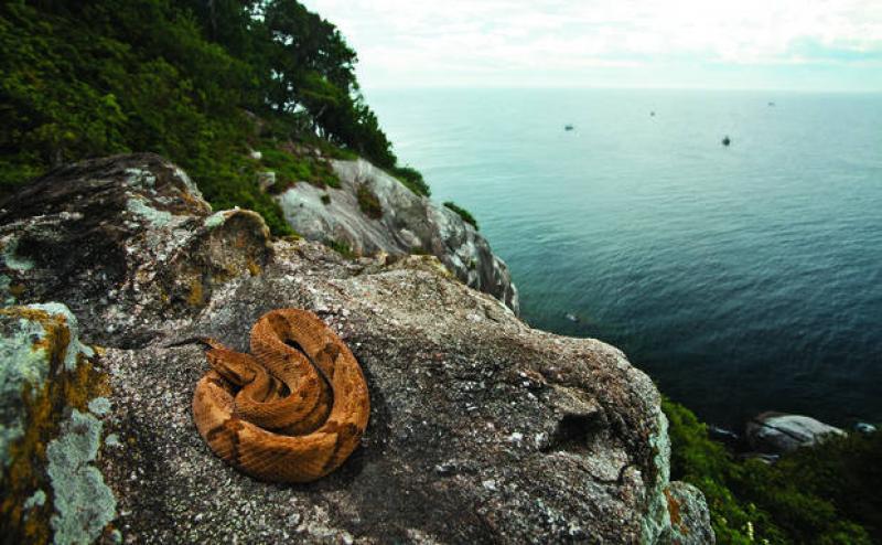 Isola di Queimada Grande in Brasile