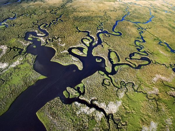 Everglades della Florida