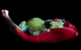 Rana multicolor di Angie Nelson
