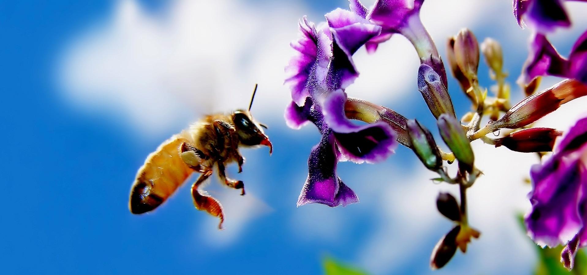 ape e fiore