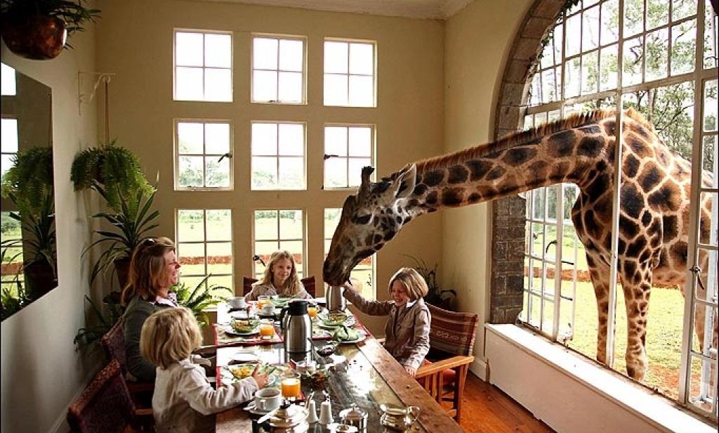Giraffa con persone