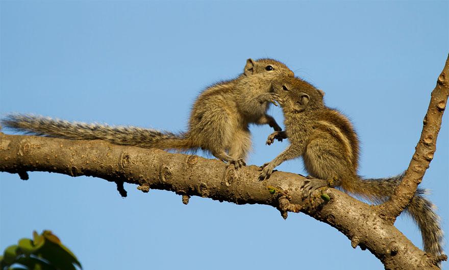 Animali che si baciano le foto pi tenere gizzeta - Giochi che si baciano a letto ...