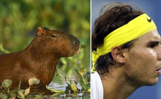 Capibara e Rafael Nadal 3