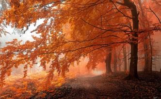 Foresta dei Carpazi Bianchi in autunno