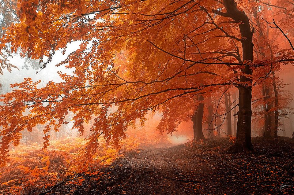 Le 12 foreste pi belle del mondo in foto spettacolari for Foto meravigliose del mondo