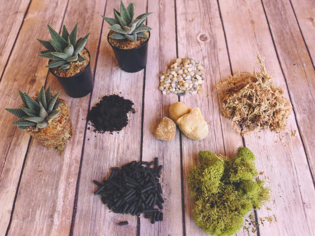 Elementi del terrario di piante grasse