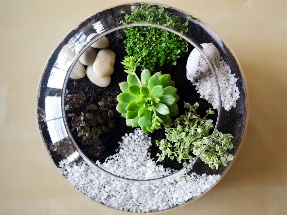 Ghiaia per piante grasse