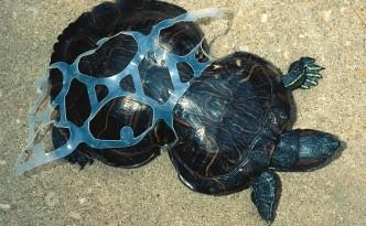 Tartaruga intrappolata