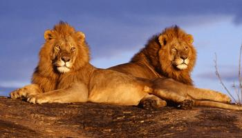10 Casi di animali omosessuali in natura