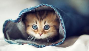 Daisy, il gattino più tenero del mondo