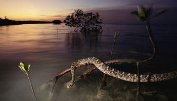 Flora e fauna delle zone umide in 12 foto spettacolari