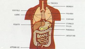 11 Organi senza i quali si può (tranquillamente) vivere